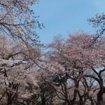 小金井公園2017-2