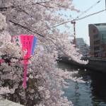 目黒川2015-1