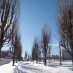 冬の青森2018-6