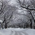 冬の青森2018-4