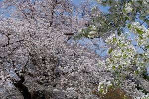 小金井公園2021春
